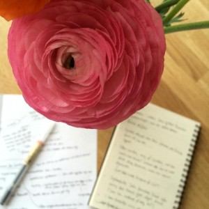 Ranunkel, skriva